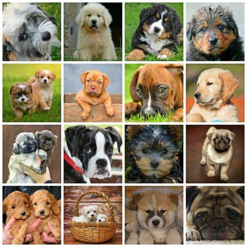 Collage de razas de perros