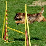 pruebas de agility